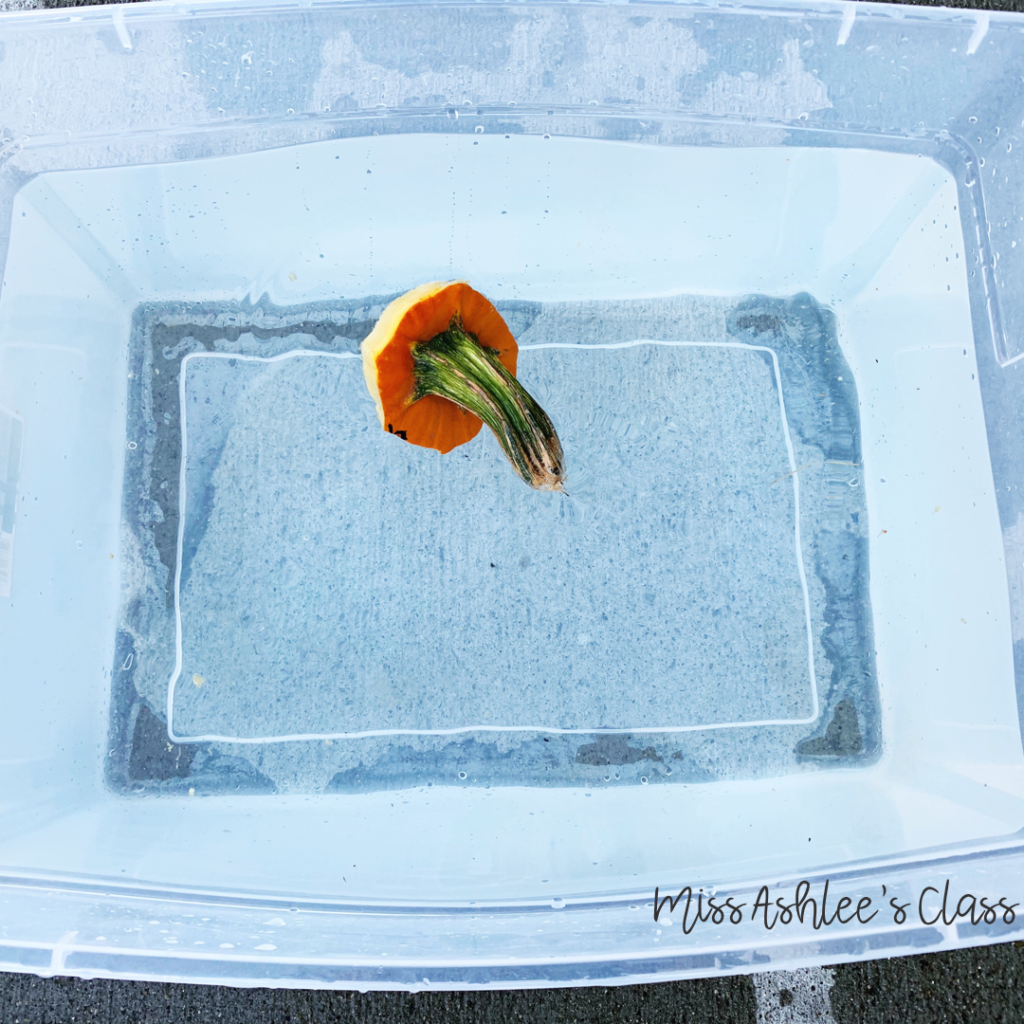 pumpkin stem floating in a tub of water