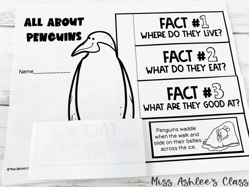 penguin fact flap page